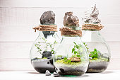 Stunning jar with piece of green forest with self ecosystem