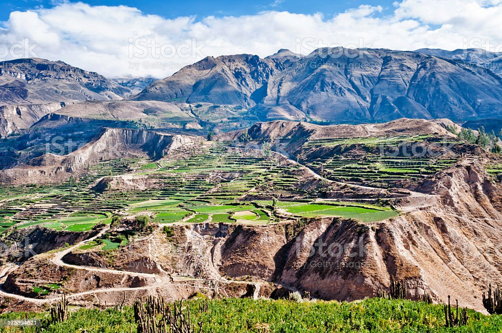 Colca Canyon in Peru – Foto
