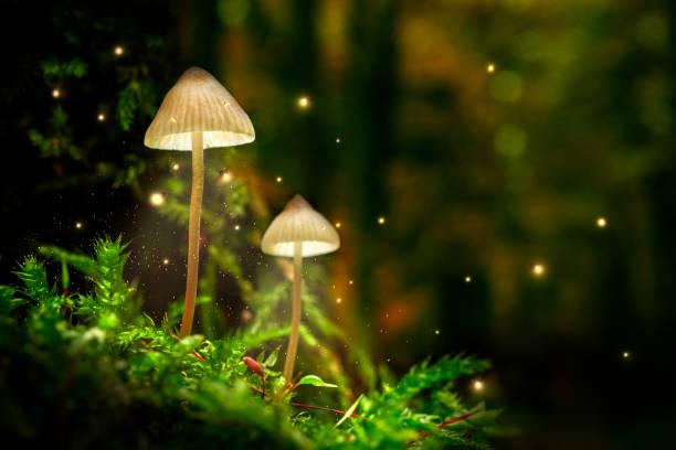Atemberaubende Pilze auf Moos und Glühwürmchen im Wald in der Dämmerung – Foto