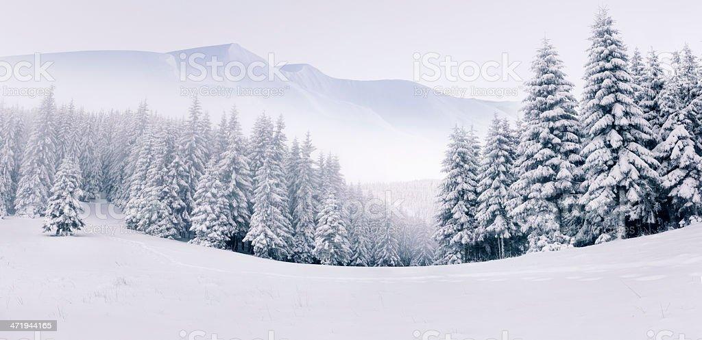 Panorama der nebeligen winter-Landschaft – Foto