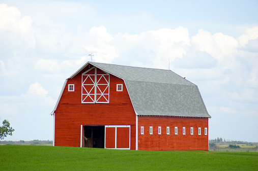 A well kept and painted red barn with a green emerging grain field surrounding it -