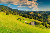 Summer alpine landscape with green fields and valleys,Bran,Transylvania,Romania,Europe