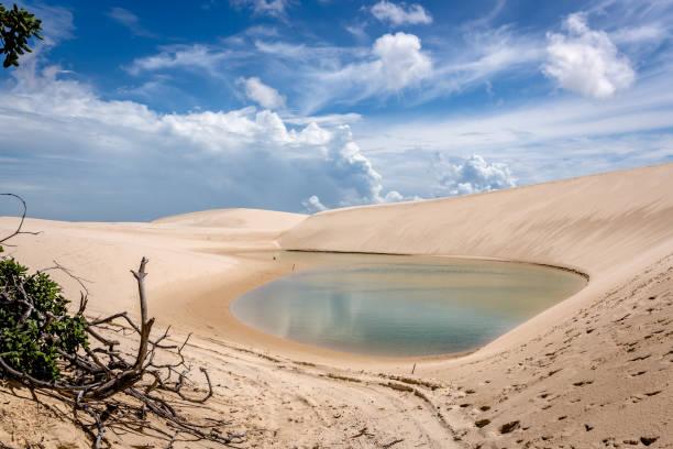 브라질 북쪽에서 멋진 시나리오 - 생태 보전 지역 뉴스 사진 이미지