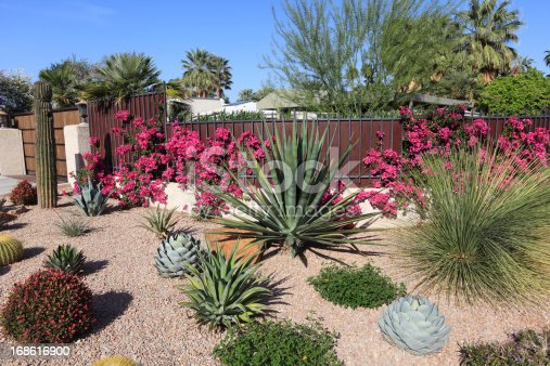 Beautiful xeriscaped residential garden of cactus,succulents,bougainvillea and other arid perennial plants.