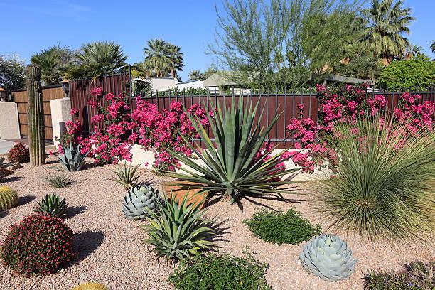 atemberaubende saftige und kaktus wasserverbrauch garten - gartenkies stock-fotos und bilder