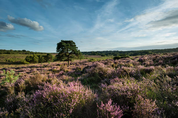 Stunning Summer sunset landscape image of Bratley View in New Forest National Park England stock photo