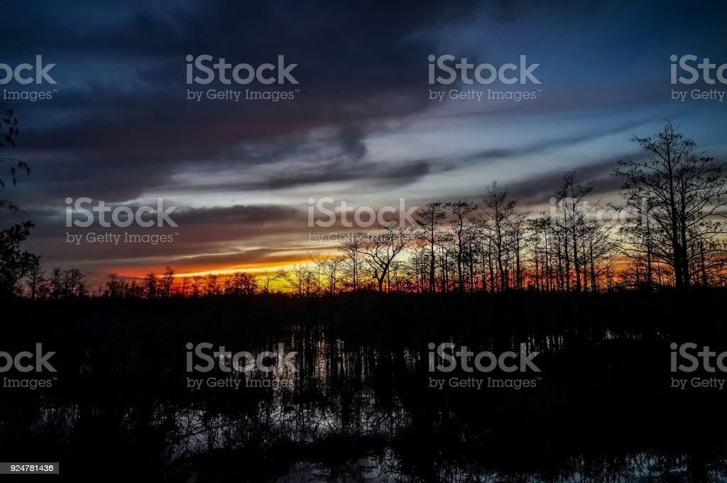 stunning sunrise in the swamp stock photo
