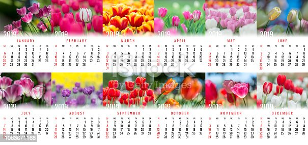 1019268352 istock photo Stunning Tulip Monthly Wall Calendar for 2019 year 1063671168