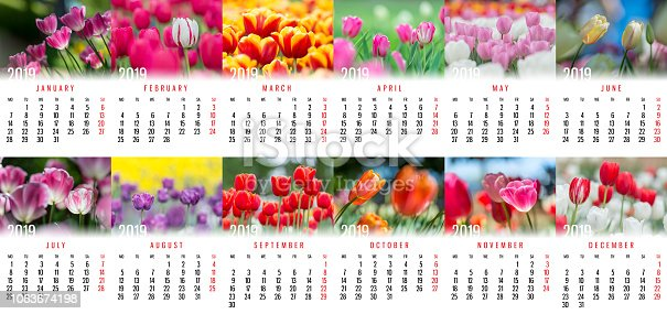 1019268352 istock photo Stunning Tulip Monthly Wall Calendar for 2019 year 1063674198