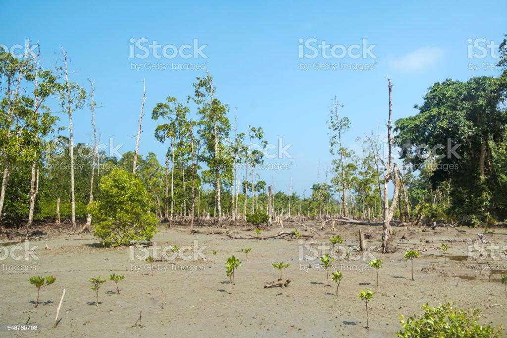 Stunning view of Havelock Island Beach, beautiful tree in the sea water, stock photo