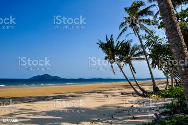 Dunk Island Holidays: Free Cassowary Images, Pictures, And Royalty-Free Stock