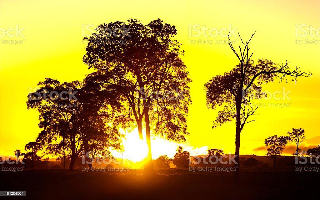 Deslumbrante paisagem aquática do Pantanal localizado no Brasil - foto de acervo