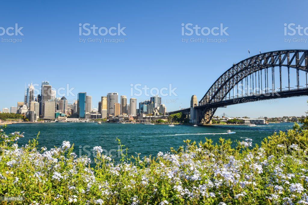 Stunning wide angle city skyline view of the Sydney CBD harbour area at Circular Quay with the harbour bridge. Seen from Dr Mary Booth Lookout in Kirribilli, Sydney, Australia. Flowers in foreground. stock photo