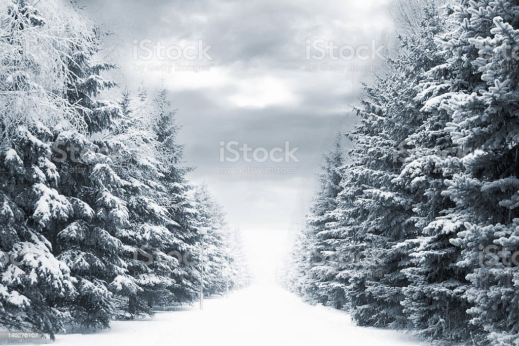 Stunning winter forest road covered with snow royalty-free stock photo
