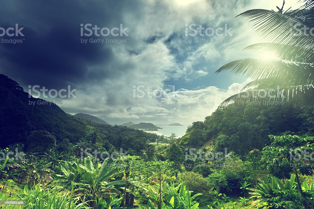 A stunningly beautiful view of the jungle of Seychelles stock photo