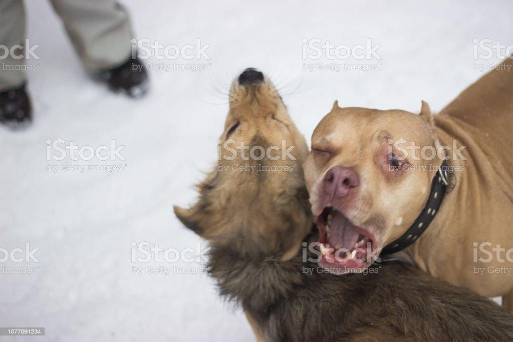 dumme hunde