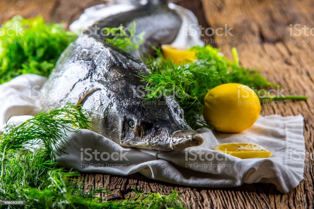 Sturgeon fish with dill and lemon on rustic oak table stock photo