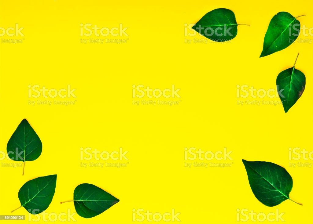 Style minimalism. Green leaves royalty-free stock photo