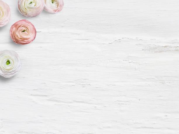 Estilo Foto stock. Maqueta escritorio femenino con flores de botón de oro, Ranunculus, espacio vacío y shabby fondo blanco. Vista superior. Imagen para el blog o las redes sociales - foto de stock