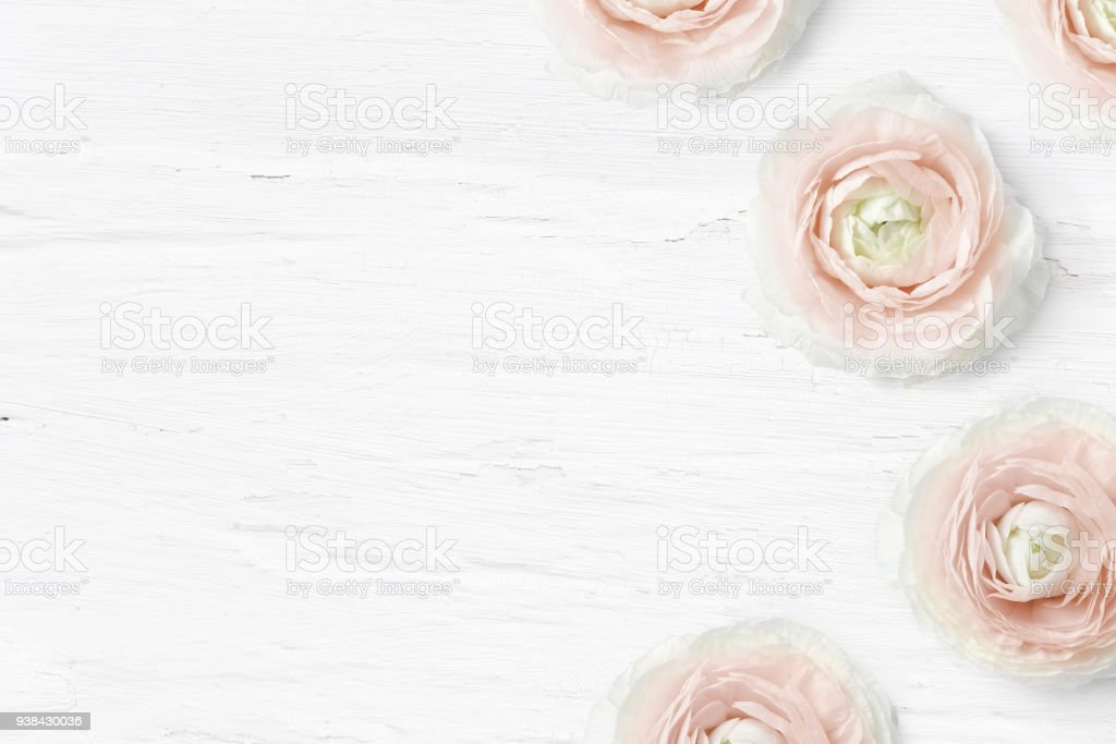 Styled stock photo. Feminine desktop mockup with buttercup flowers, Ranunculus, empty space and shabby white background. Top view. Picture for blog or social media stock photo