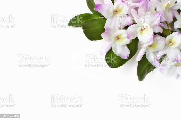 Styled stock photo feminine desktop scene dendrobium orchid flowers picture id931473480?b=1&k=6&m=931473480&s=612x612&h=v3qp4nlbrlisomgziml csafh20qc 1yyaycli ygdc=