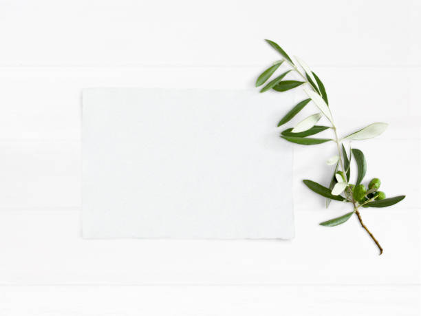 Styled stock photo. Feminine wedding desktop mockup with green olive branch and white empty paper card. Foliage composition on old white wooden background. Top view. Flat lay picture stock photo