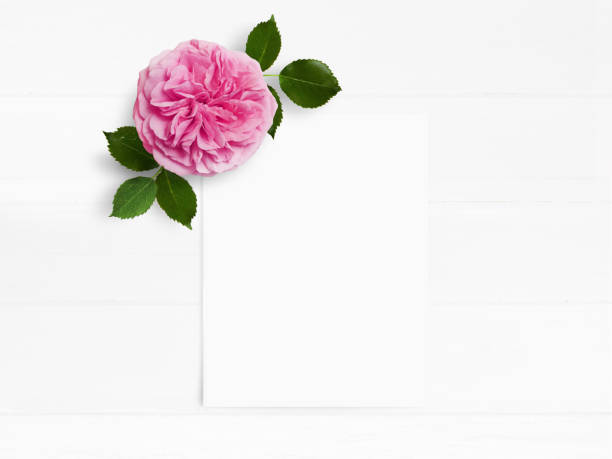 Styled stock photo. Feminine wedding desktop mockup with pink English rose flower and white empty paper card. Floral composition on old white wooden background. Top view. Flat lay picture stock photo