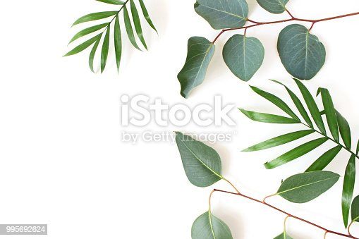 Styled stock photo. Jungle composition of green palm and eucalyptus leaves isolated on white background. Tropical summer holiday, vacation concept, flat lay, top view.
