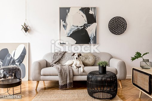 istock Stylish and scandinavian living room interior of modern apartment with gray sofa, design wooden commode, black table, lamp, abstrac paintings on the wall. Beautiful dog lying on the couch. Home decor. 1172207142