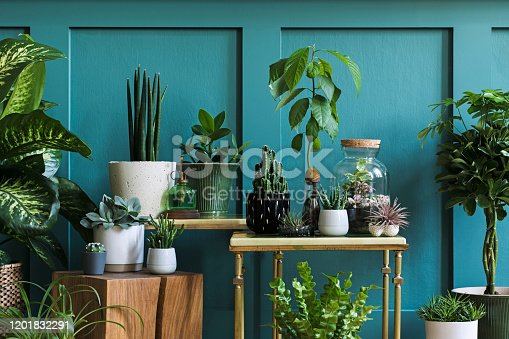Stylish living room interior filled a lot of beautiful plants in different design pots. Composition of home garden jungle. Modern home decor. Floral concept. Template.