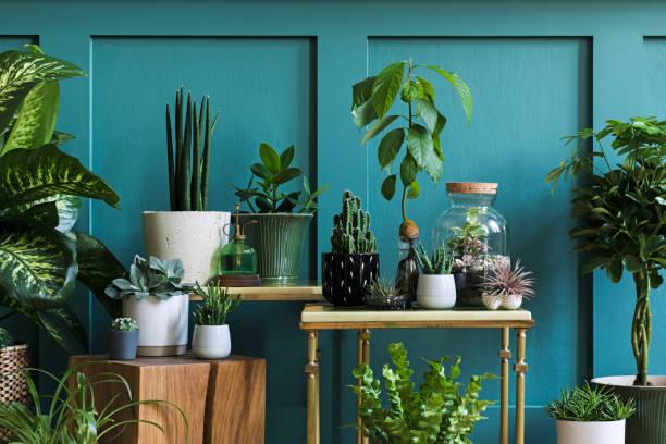 家の庭のインテリアのスタイリッシュな組成物は、異なるデザインポットで美しい植物、サボテン、多肉植物、空気プラントの多くを満たしました。緑の壁のパネル。テンプレート。ホーム� - ヴィンテージインテリア ストックフォトと画像