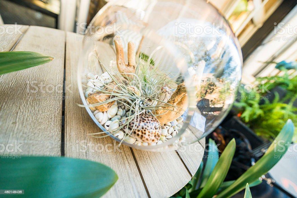 Nyc Stylish Decorative Plant Terrarium On Table Outdoors Stock Photo