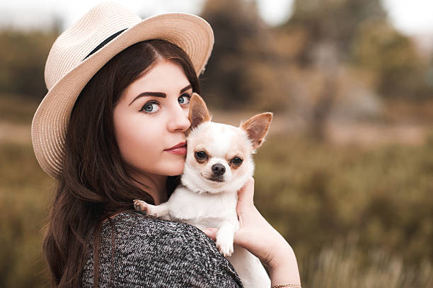 Stylish girl with chihuahua puppy stock photo