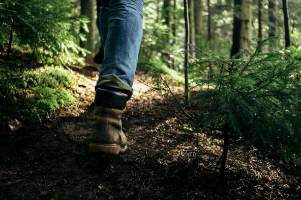 stylish hipster traveler walking in sunny forest in the mountains stylish hipster traveler walking in sunny forest in the mountains lumberjack stock pictures, royalty-free photos & images