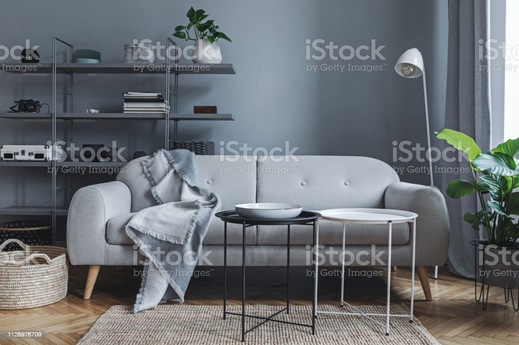 Stylish Nordic Living Room With Design Sofa With Elegant Blanket Coffee Tablewhite Lamp Big Plants And Bookstand On The Grey Wall Brown Wooden Parquet Concept Of Minimalistic Interior Stock Photo Download