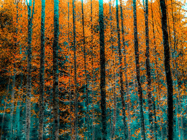 Stylized Autumn Forest in Orange and Teal - Toned Photograph stock photo
