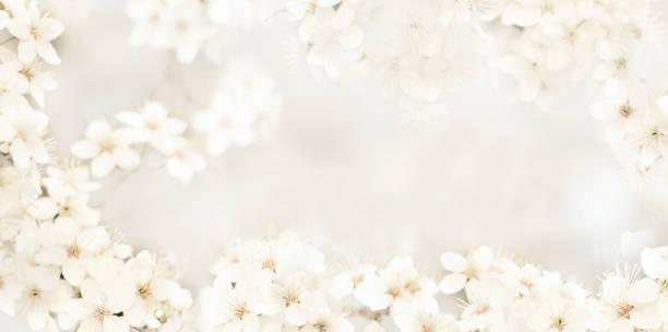 fundo delicado estilizado com flores pequenas - casamento - fotografias e filmes do acervo