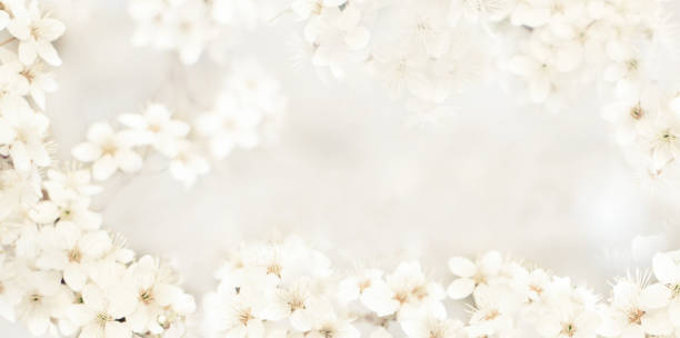 212 608 Wedding Backgrounds Stock Photos Pictures Royalty Free Images Istock - Wedding Wallpaper, Discount Photo Studio Wedding Background Wallpaper 2021 On Sale At Dhgate Com