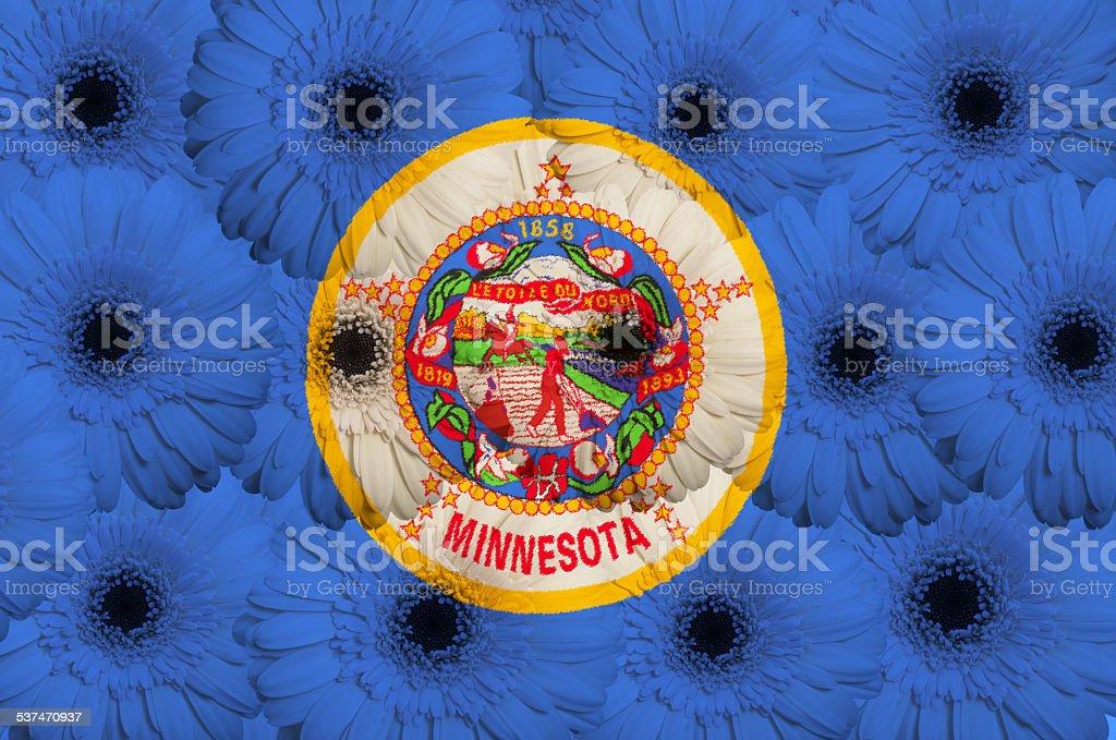 stylized flag of minnesota with gerbera flowers lot stock photo