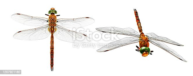 Stylized photo dragonfly from two angles isolated on white background.