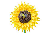 Stylized sunflower made of fabric and coffee. Handmade flower crafts on a white background. Sunny baby flower concept. Symbol of summer and sun