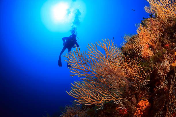 Suba diving - Gorgonians reef stock photo