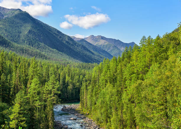 Subalpine coniferous taiga in Siberian mountains Subalpine coniferous taiga in Siberian mountains. Deep forest and a narrow bed of a bubbling rivulet. Sayan mountains. Russia taiga stock pictures, royalty-free photos & images