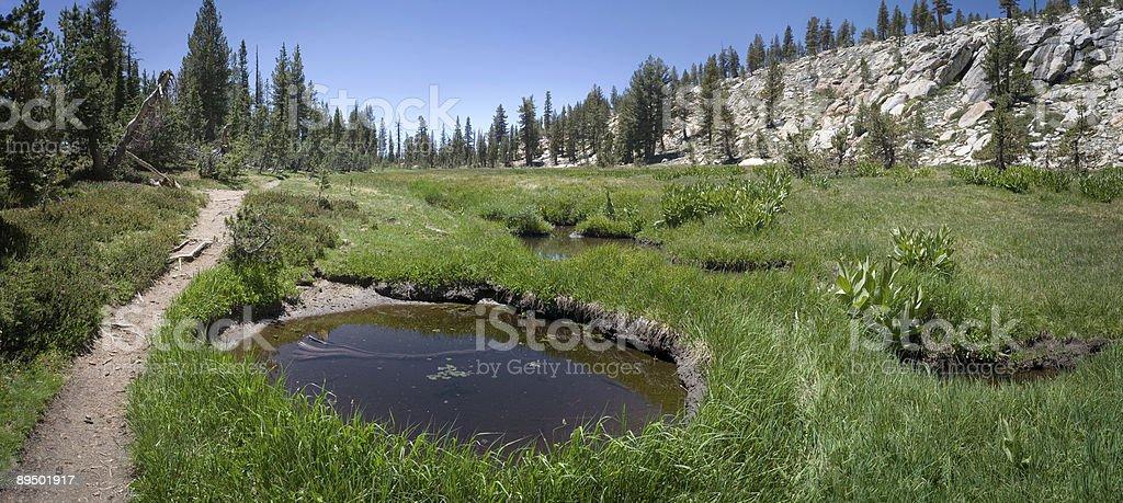 Subalpine Łąka na Mt Hoffman, Yosemite zbiór zdjęć royalty-free