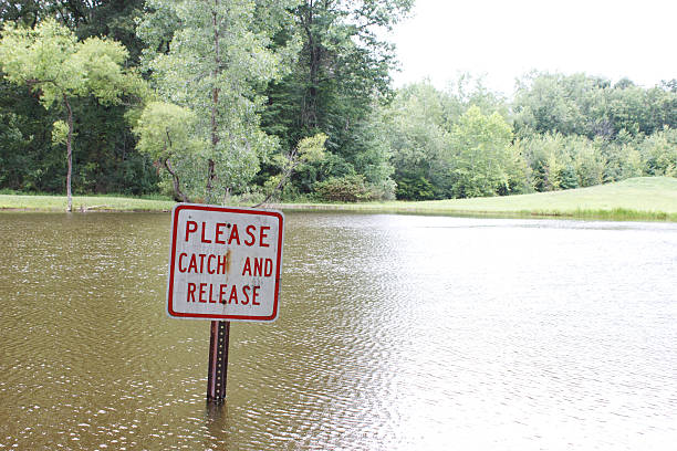 Submerged catch and release sign in a pond stock photo