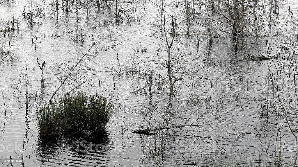 Submerged stock photo