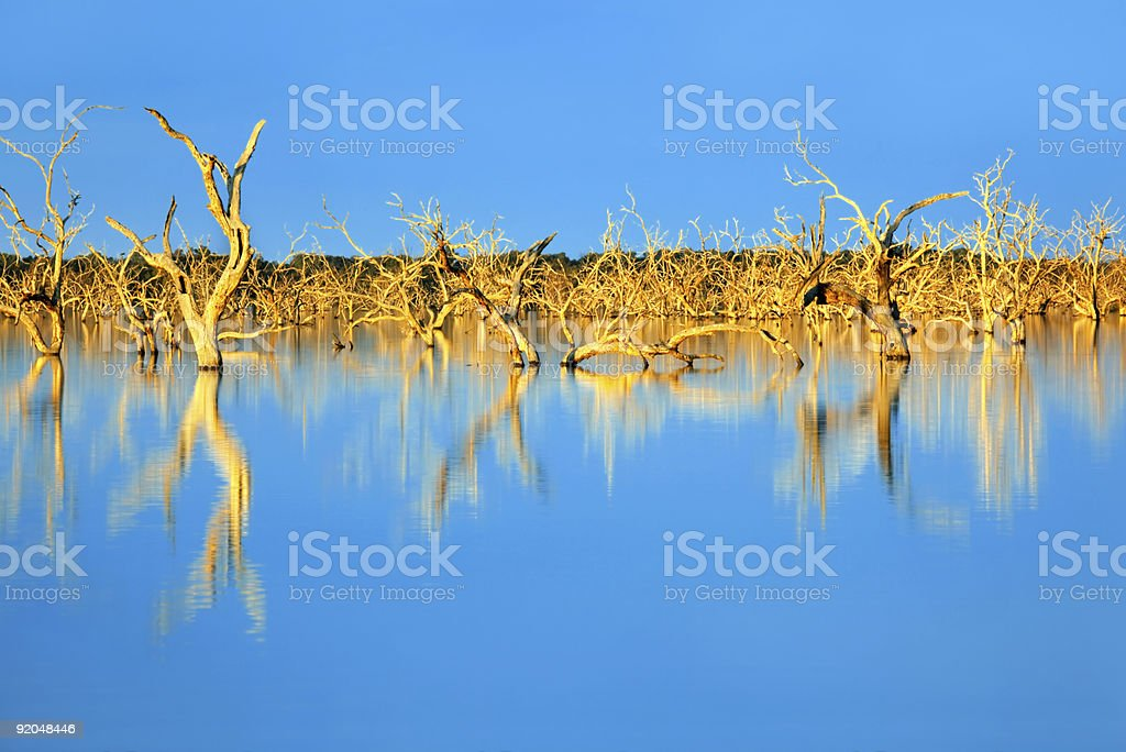 Submerged Trees stock photo