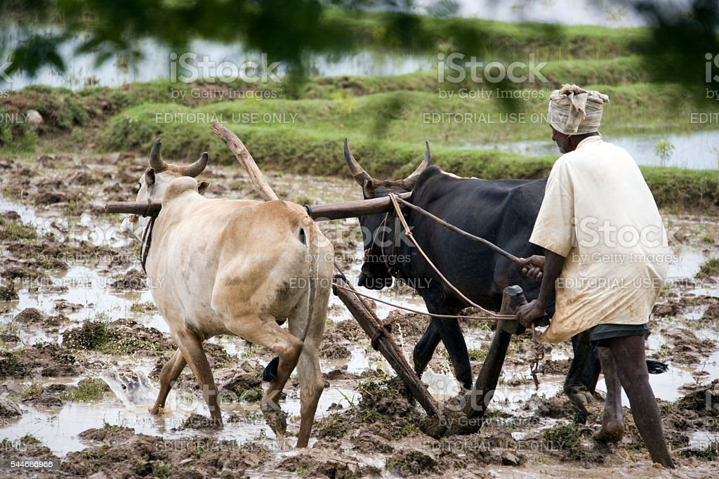 Subsitance Farmer - Tamil Nadu - India stock photo