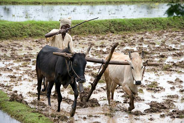 Subsitance farmer tamil nadu india picture id544713596?b=1&k=6&m=544713596&s=612x612&w=0&h=tsk9ckzdn4hkeckvejbuzcimtzilhoohiyno2tyezqi=