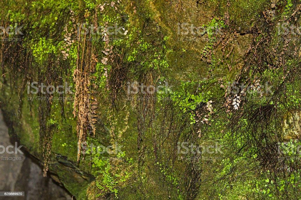 Subterranean fauna stock photo